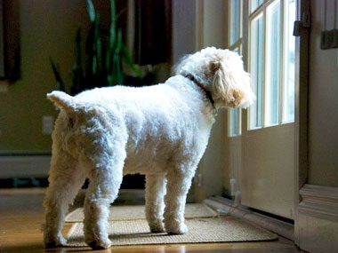 Can Dogs Know When You Are Coming Home