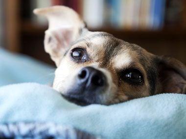 13 things dog puppy eyes