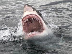 Jaws anniversary shark