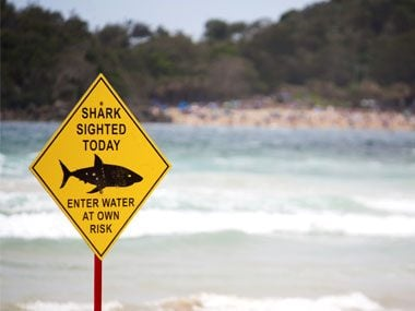 shark attacks spike in september