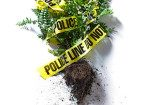 september 2015 who knew crime scene professions