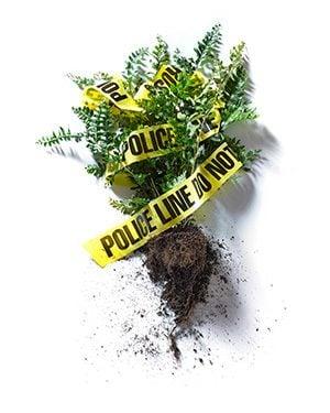 september 2015 who knew crime scene professions