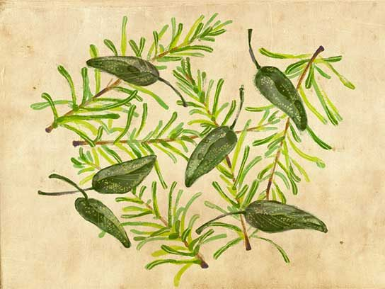 Companion Planting Herbs That Help Other Plants Grow