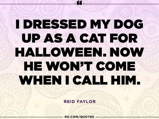 Reid Faylor's pet project