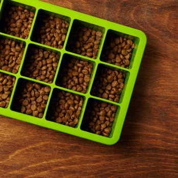 Ice Cube Tray Hacks: 9 Genius Ways You Never Thought to Use Them