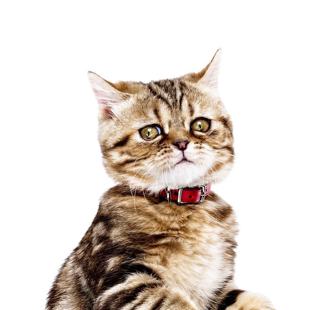 november 2015 anything for kitty