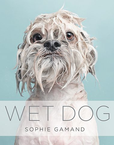7 photos of wet dogs readers digest