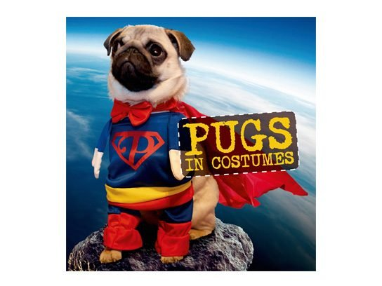 Dying to see more of the best-dressed pugs on the planet? Get the new book Pugs in Costumes. And if youu0027re thinking of owning your own pugs in costume ...  sc 1 st  Readeru0027s Digest & Pugs in Costume: Cute Ideas for Your Dog on Halloween | Readeru0027s Digest