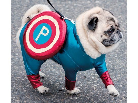 Captain Pug  sc 1 st  Readeru0027s Digest & Pugs in Costume: Cute Ideas for Your Dog on Halloween | Readeru0027s Digest