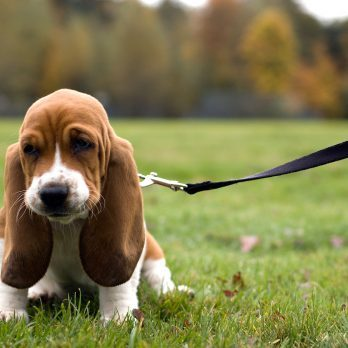 11 Beloved Dog Breeds and the Fascinating Origins of Their Names
