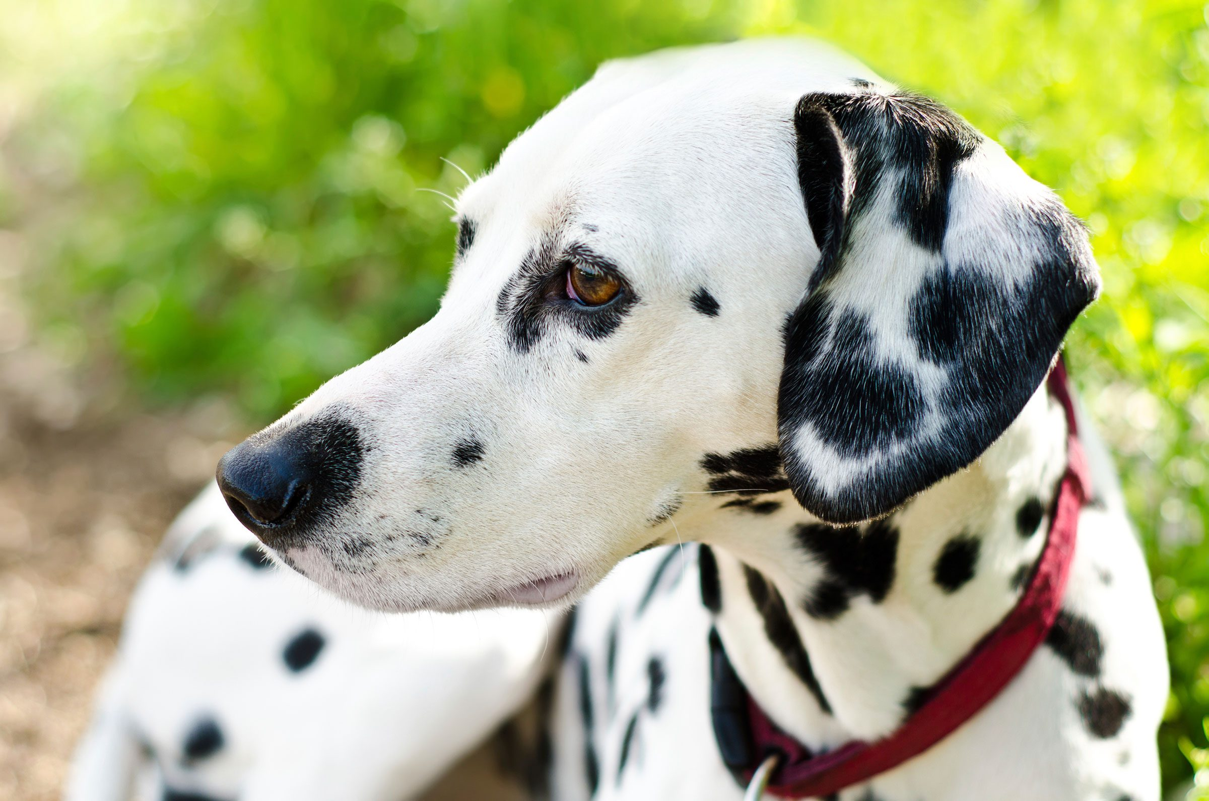 Dogs With One Blue Eye Names