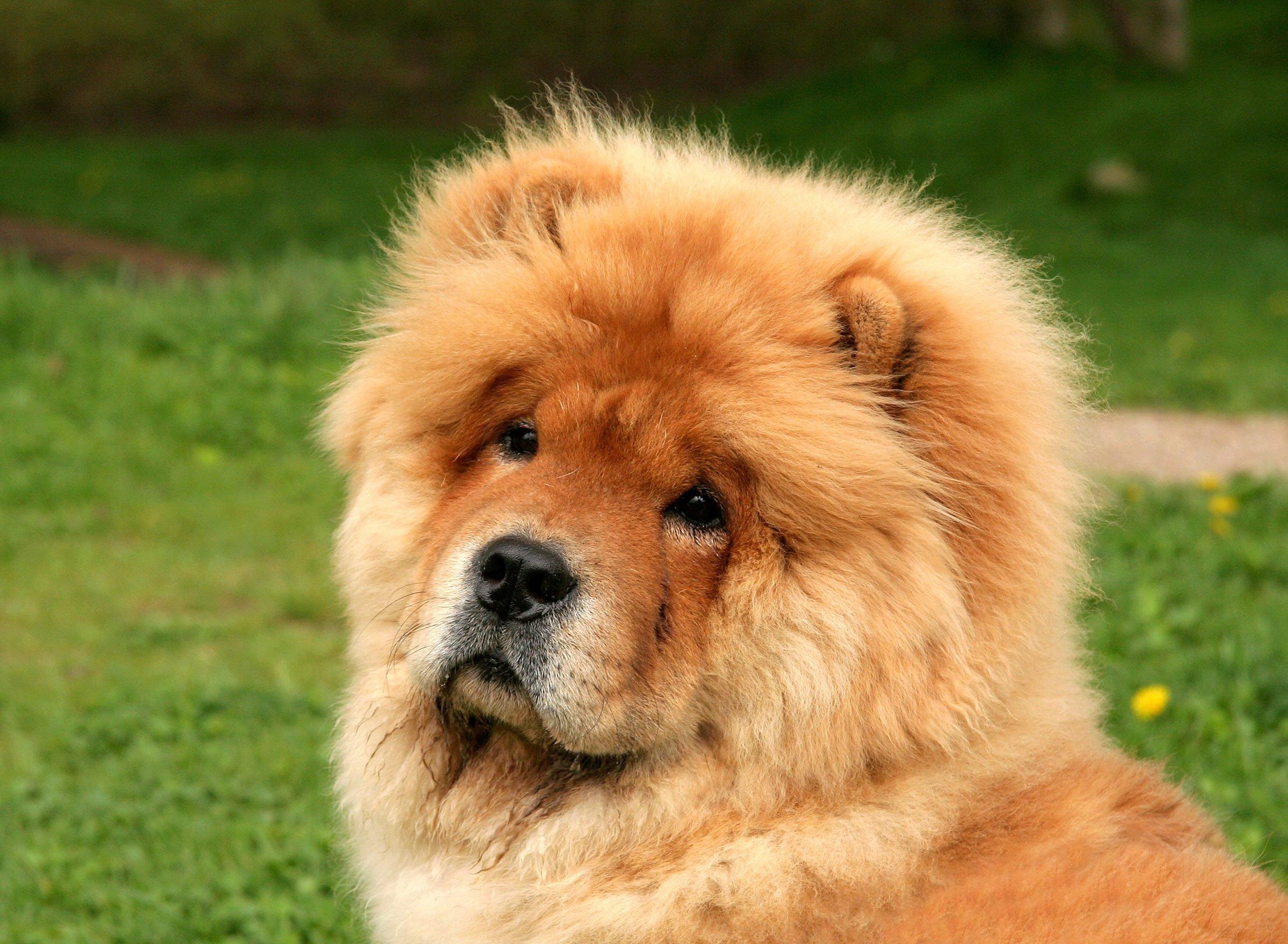 Fascinating Dog Breed Name Origins | Reader's Digest