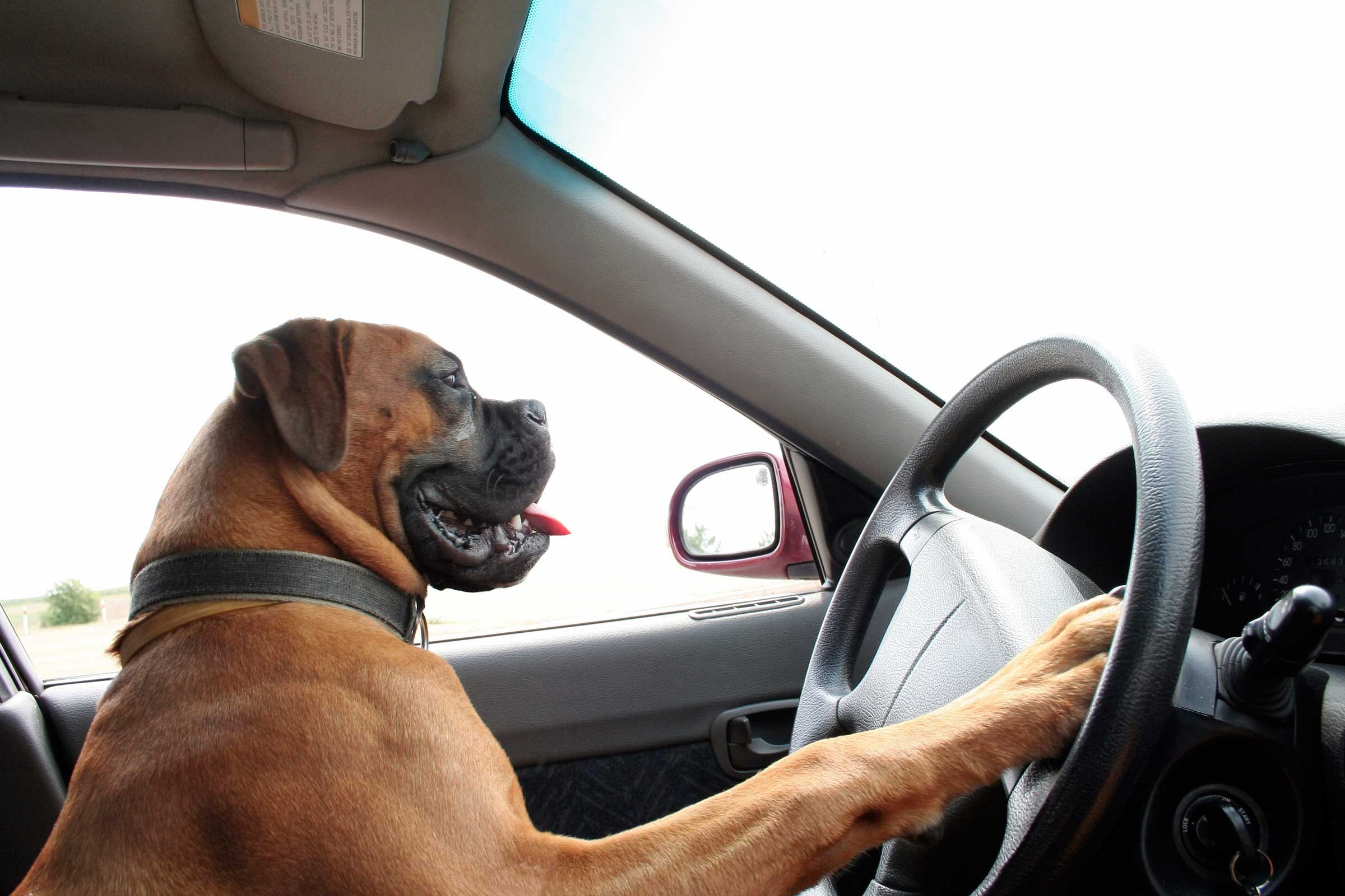 car insurance claims dog driving