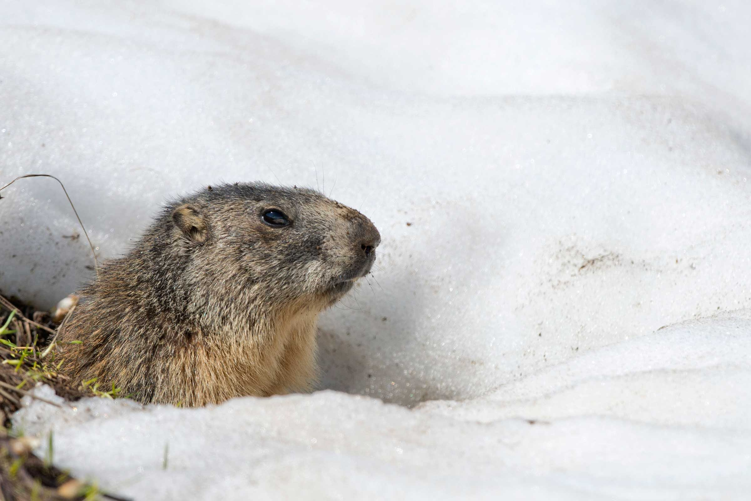 Adorable Groundhog Facts You Need to Know on Groundhog Day