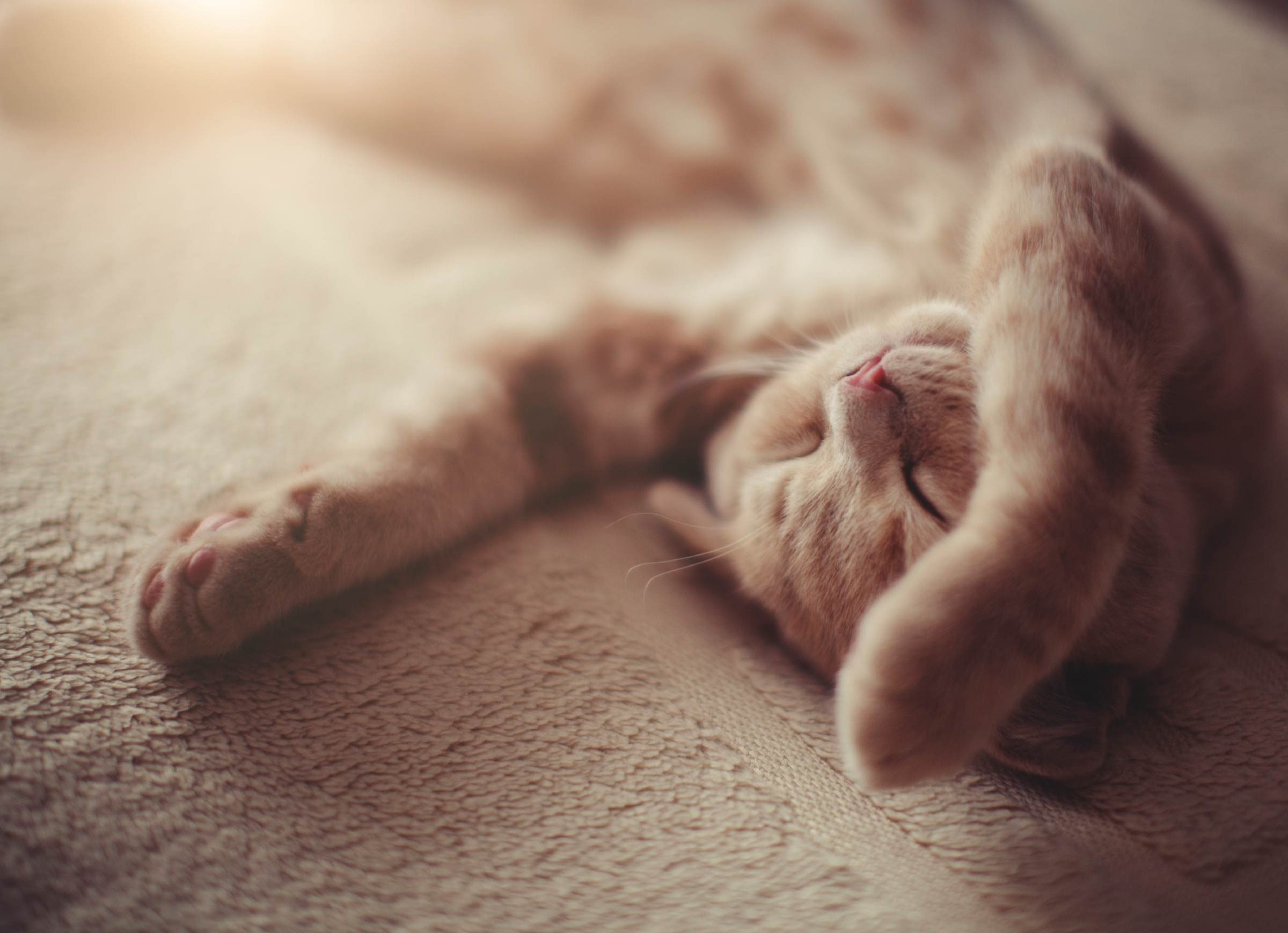 13 things you didnt know about cats dreaming
