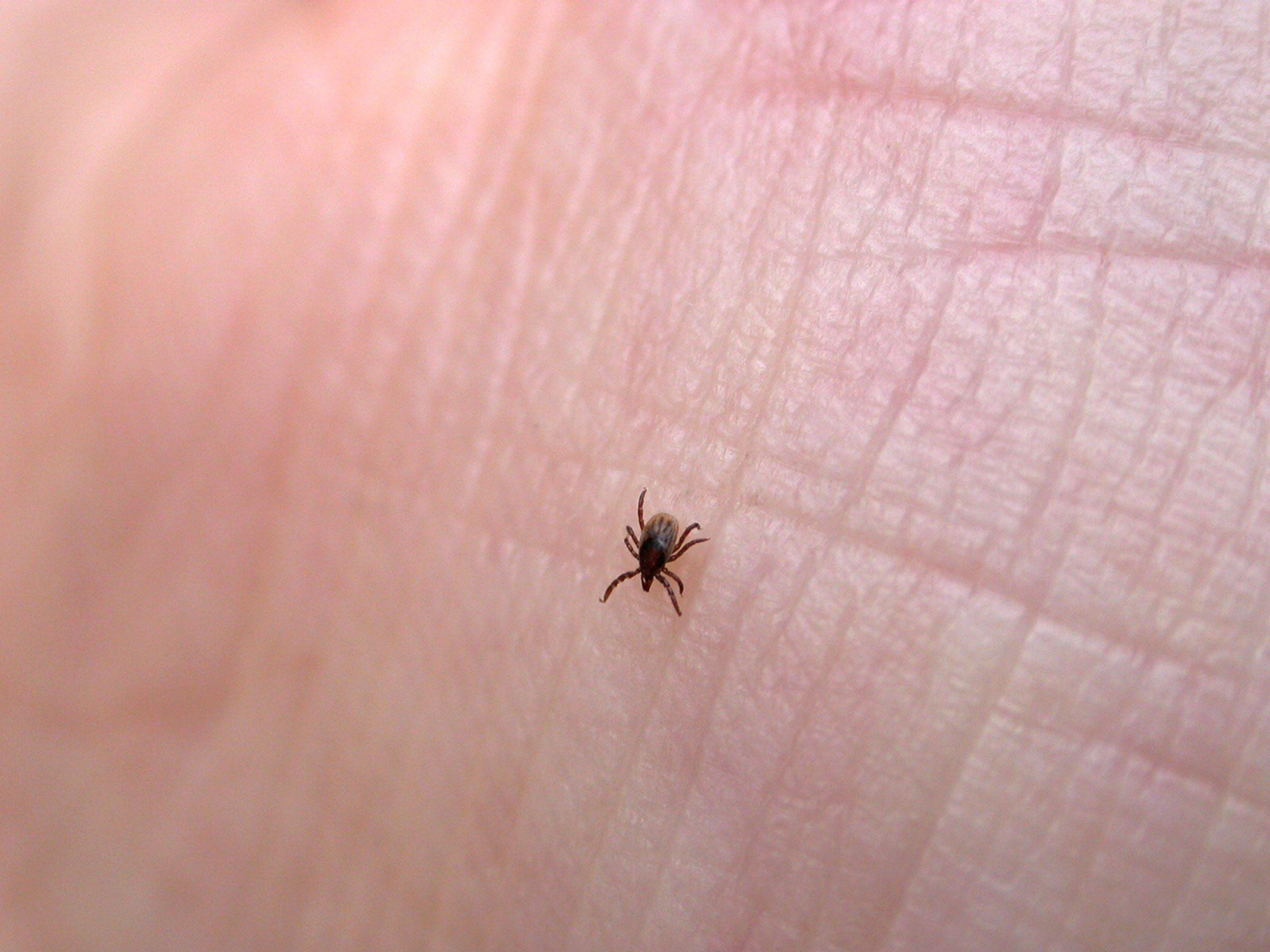 prevent tick bites 13 things ticks won u0027t tell you reader u0027s
