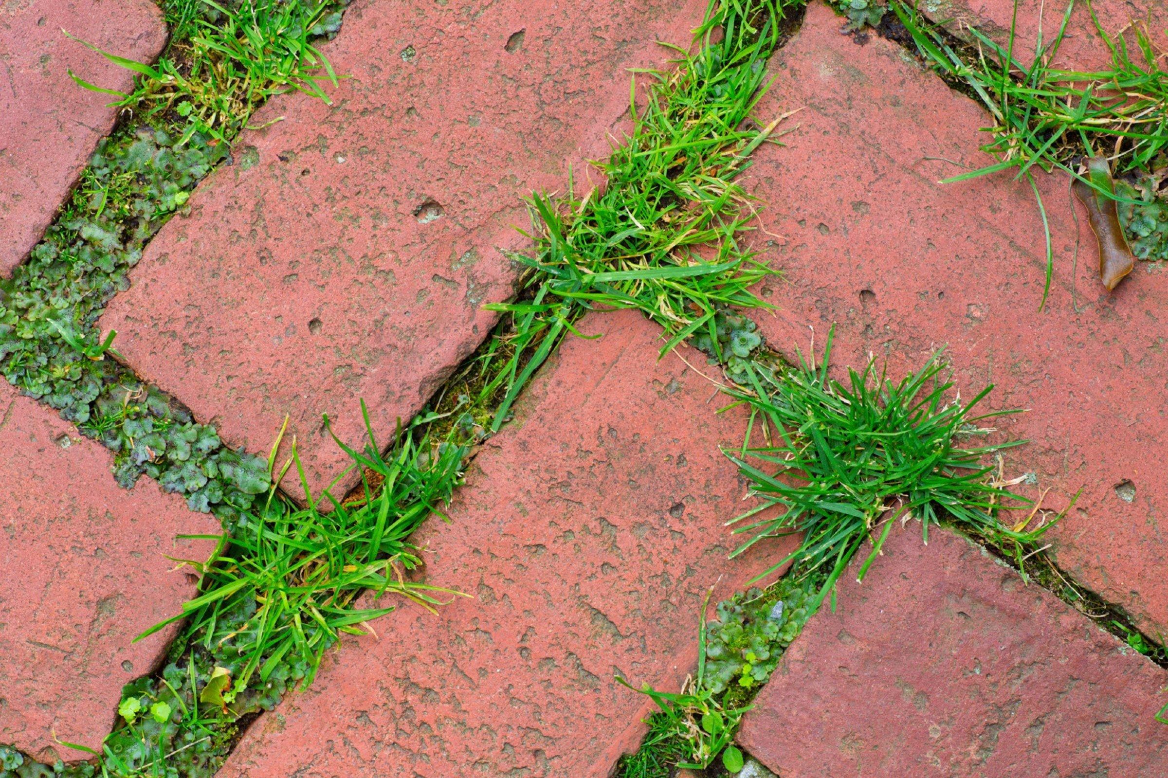 over 60 ways to use salt weeds