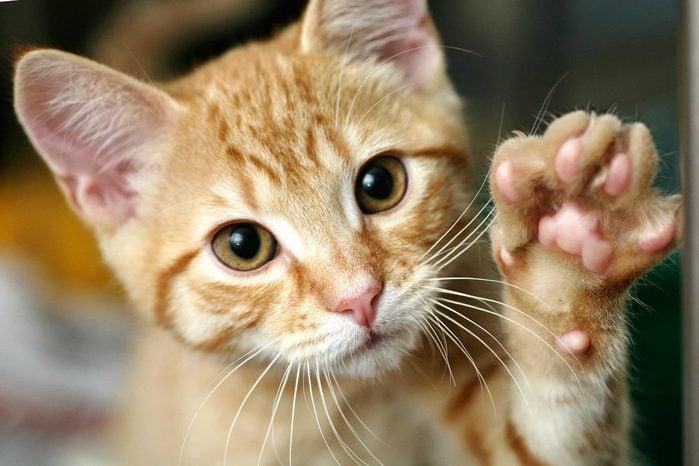 train cat shake hands