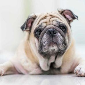 50 secrets pets old dog