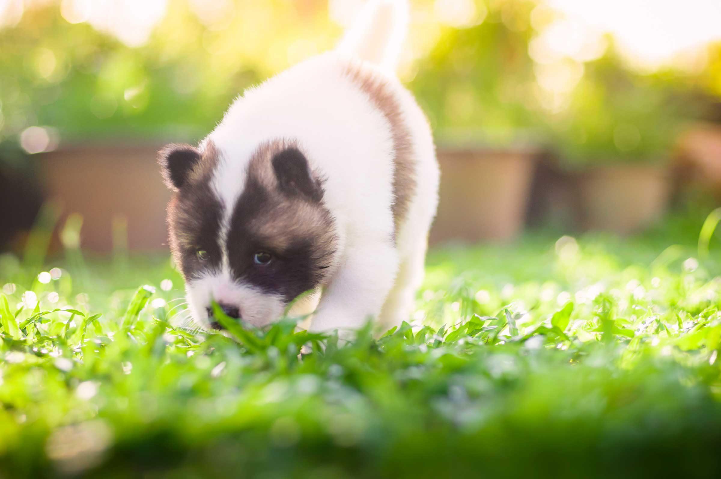 50 Secrets Your Pet Won T Tell You Reader S Digest