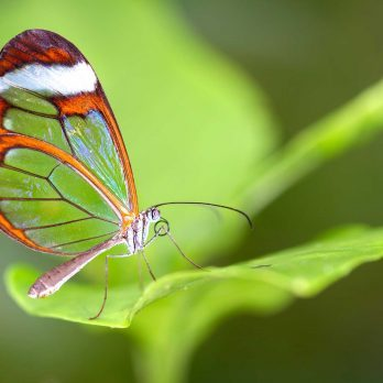6 Delightful Facts About Butterflies