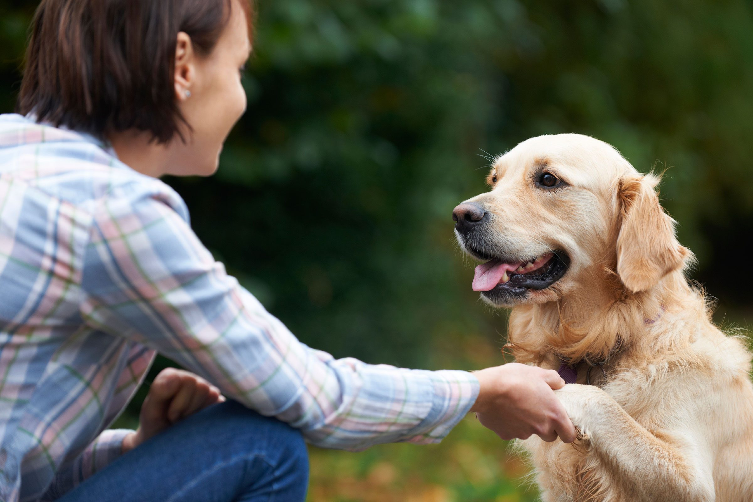 How to train your puppy 5 things to train first readers digest train your puppy how to sit ccuart Gallery