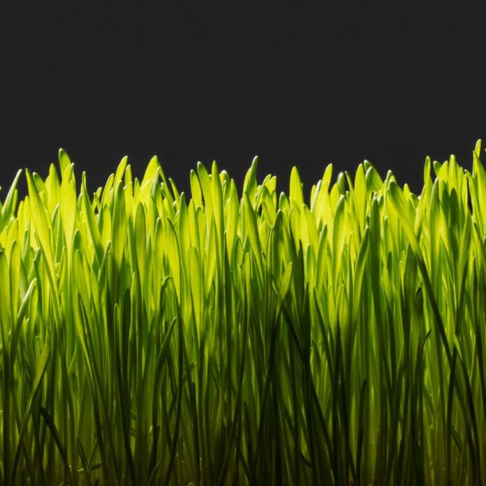 The Dark Side of the Perfectly Manicured American Lawn: Is It Giving You Cancer?