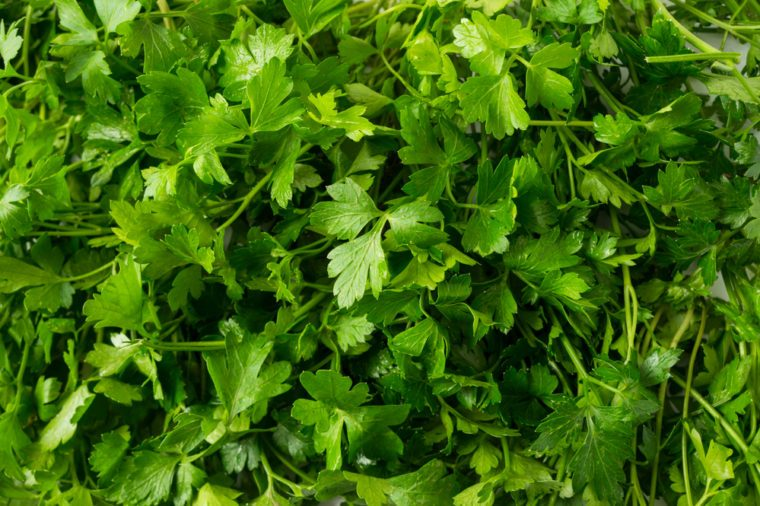 Background of parsley. Top view. Ripe parsley close-up.