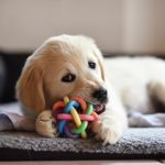 How to Train a Puppy: The First 8 Things You Need to Do
