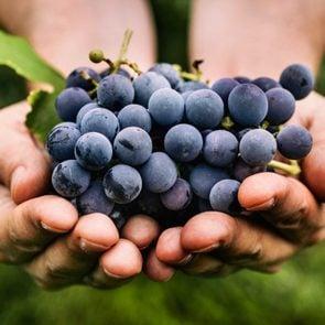 food kills dogs grapes