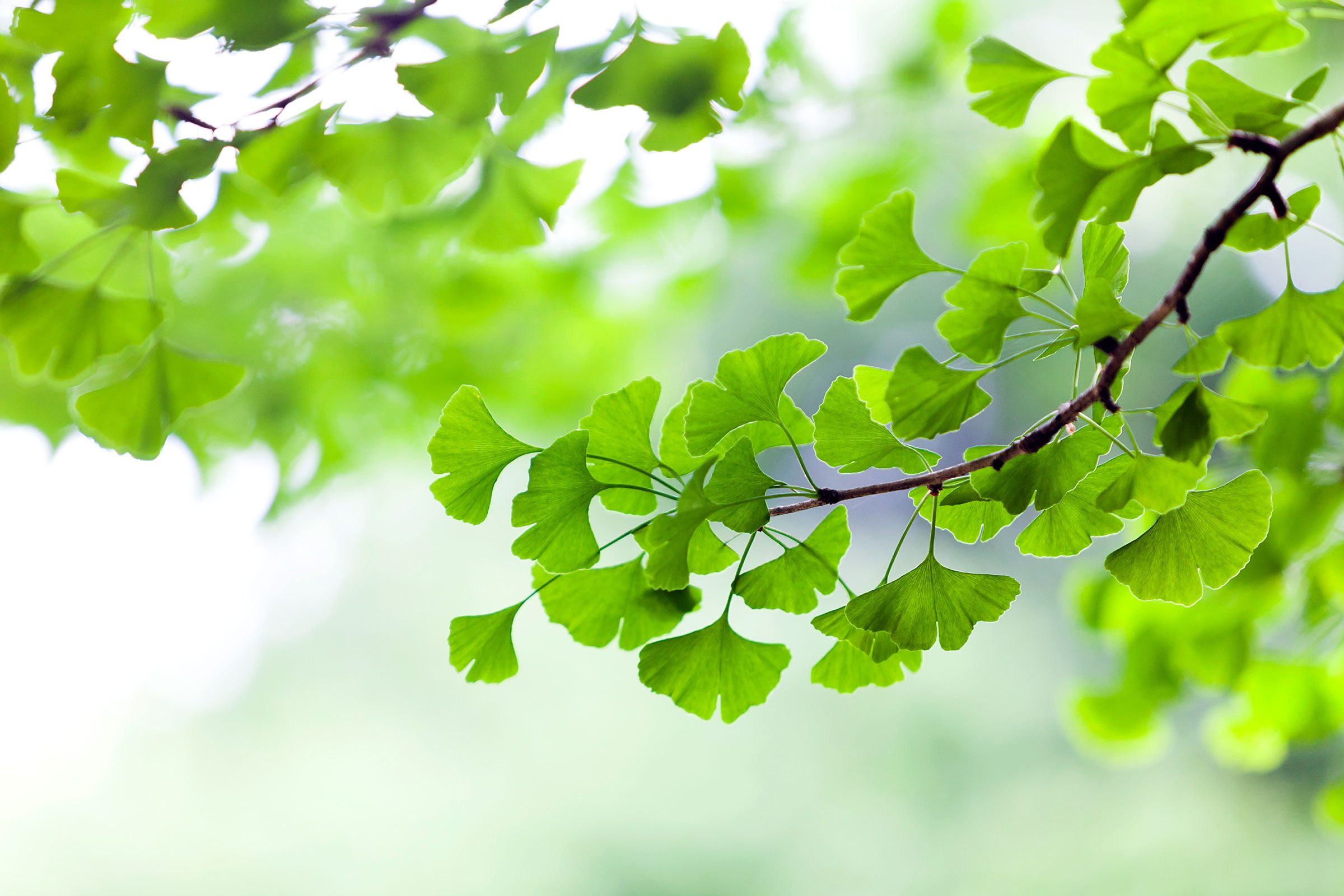 7 Weird Facts About Trees | Reader's Digest
