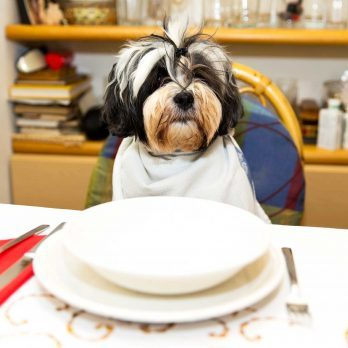 7 Signs You Love Your Pet Way Too Much