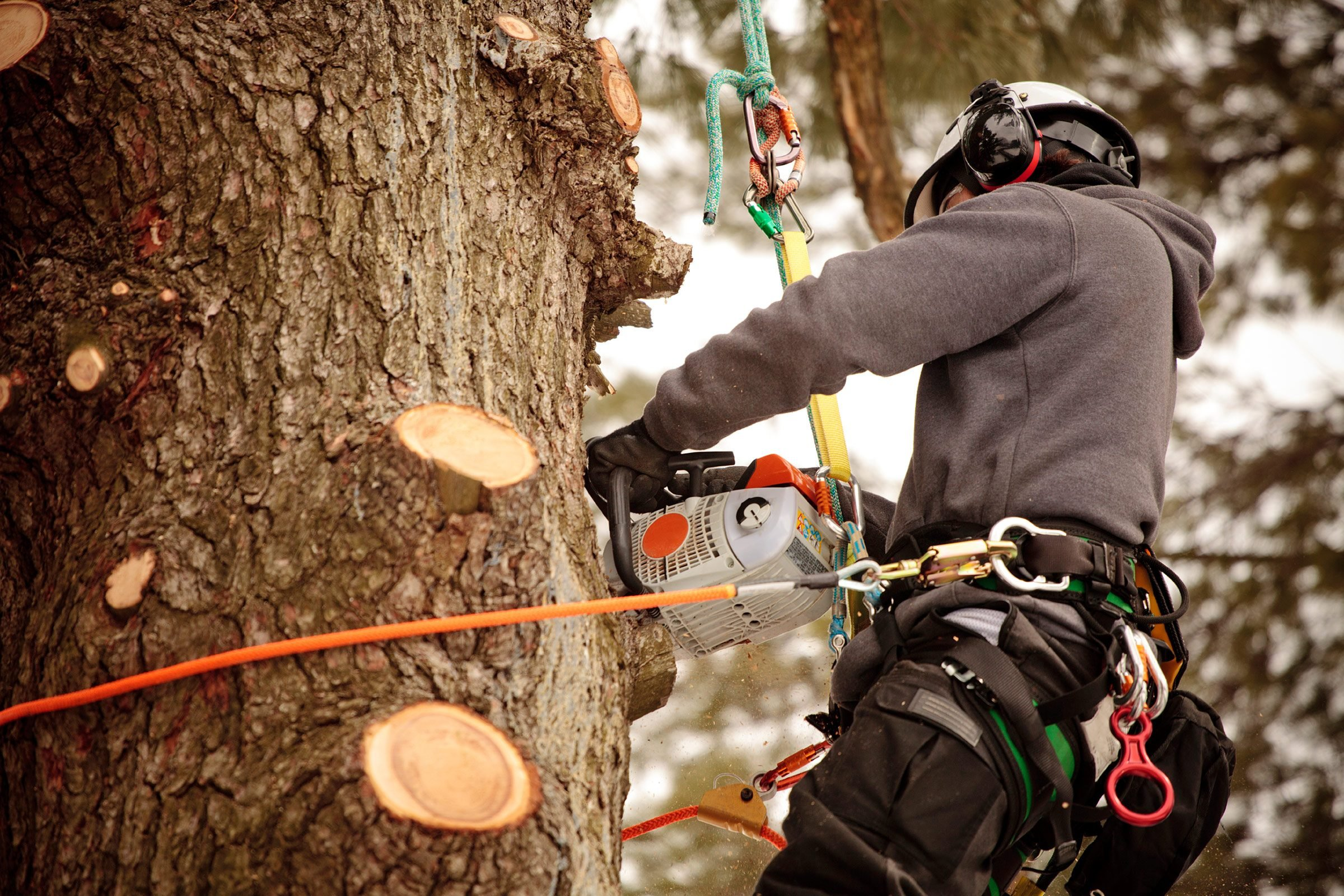 Hiring an Arborist: 20 Things to Know | Reader's Digest