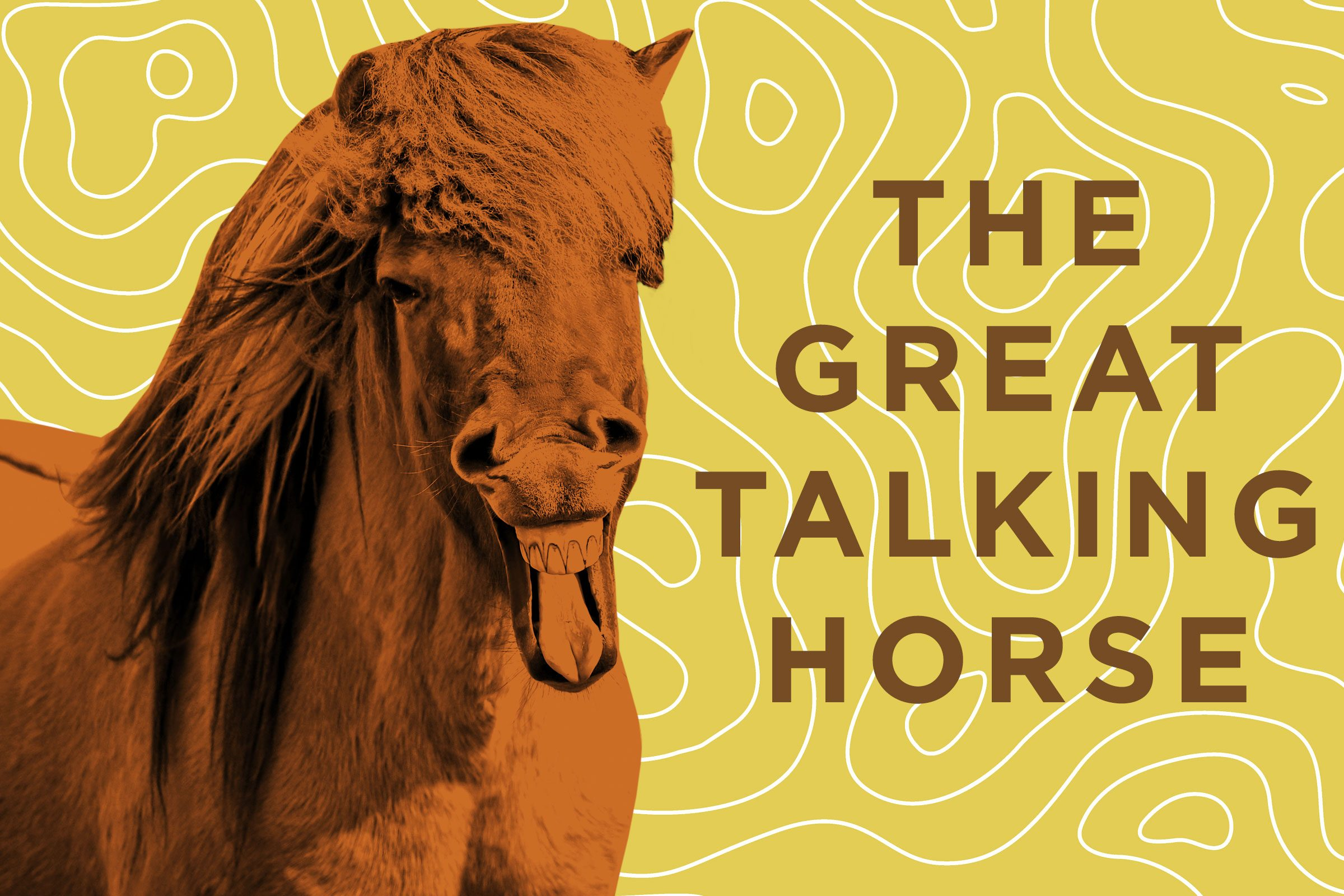 05-horse-jokes-talking-horse.jpg