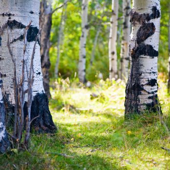 7 Weird Facts About Trees You Never Knew