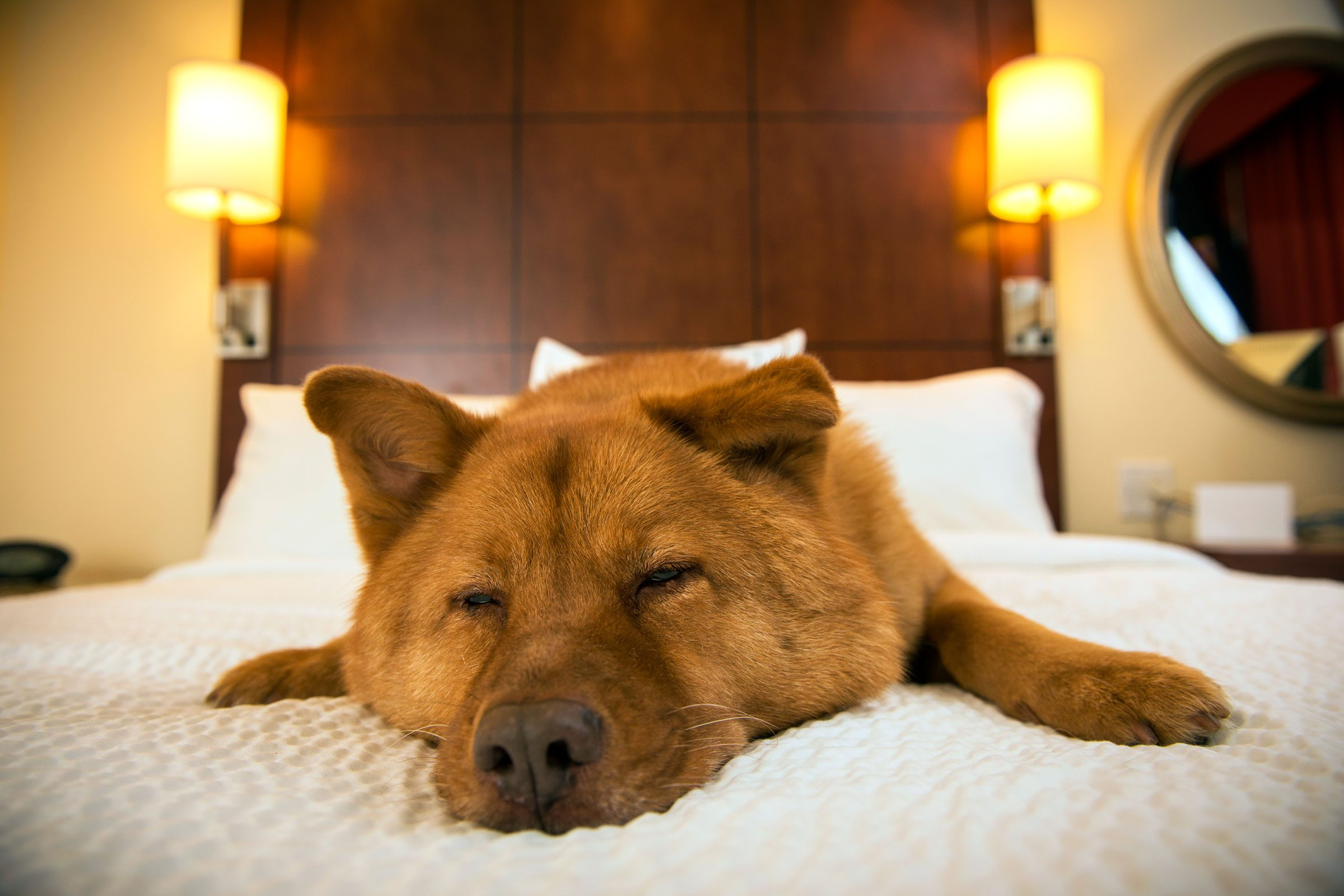 Image result for This Is the 1 Thing Hotel Owners Wish You'd Do When You Travel With Your Dog