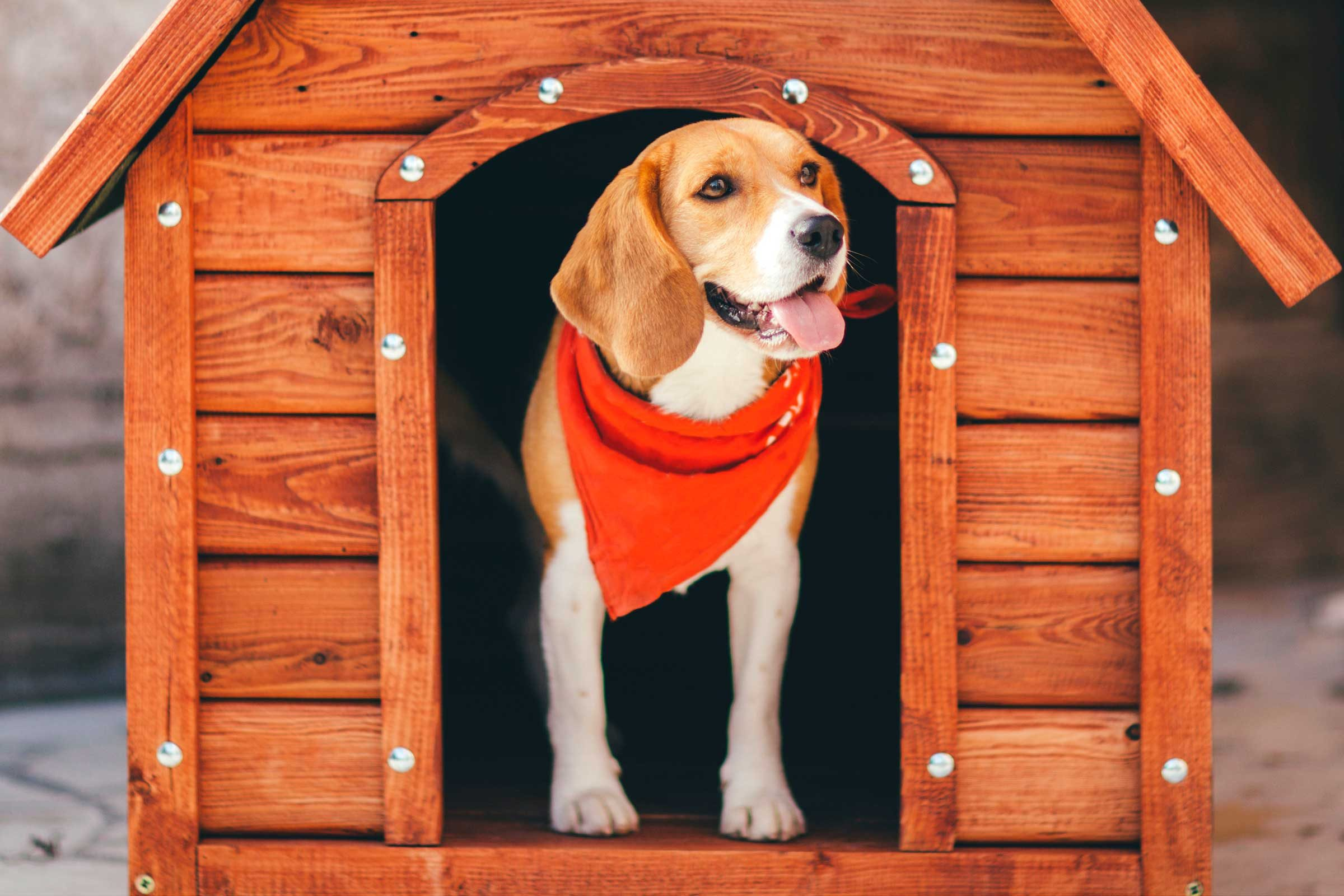 Pictures of a kennel CONVERT WMV WMA MKV ASF JPG BMP PNG TIF