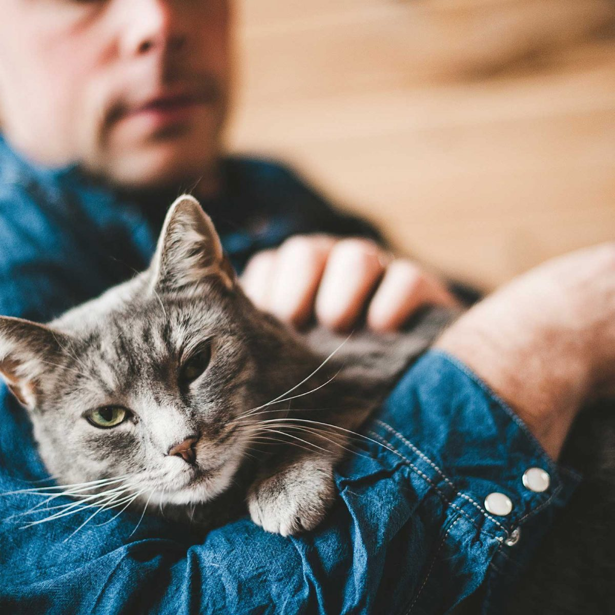 3e6461f46 Cat Behavior: Things Your Cat Wants to Tell You | Reader's Digest