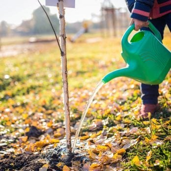 Need a Tree Guy? 20 Secrets Your Arborist Won't Tell You