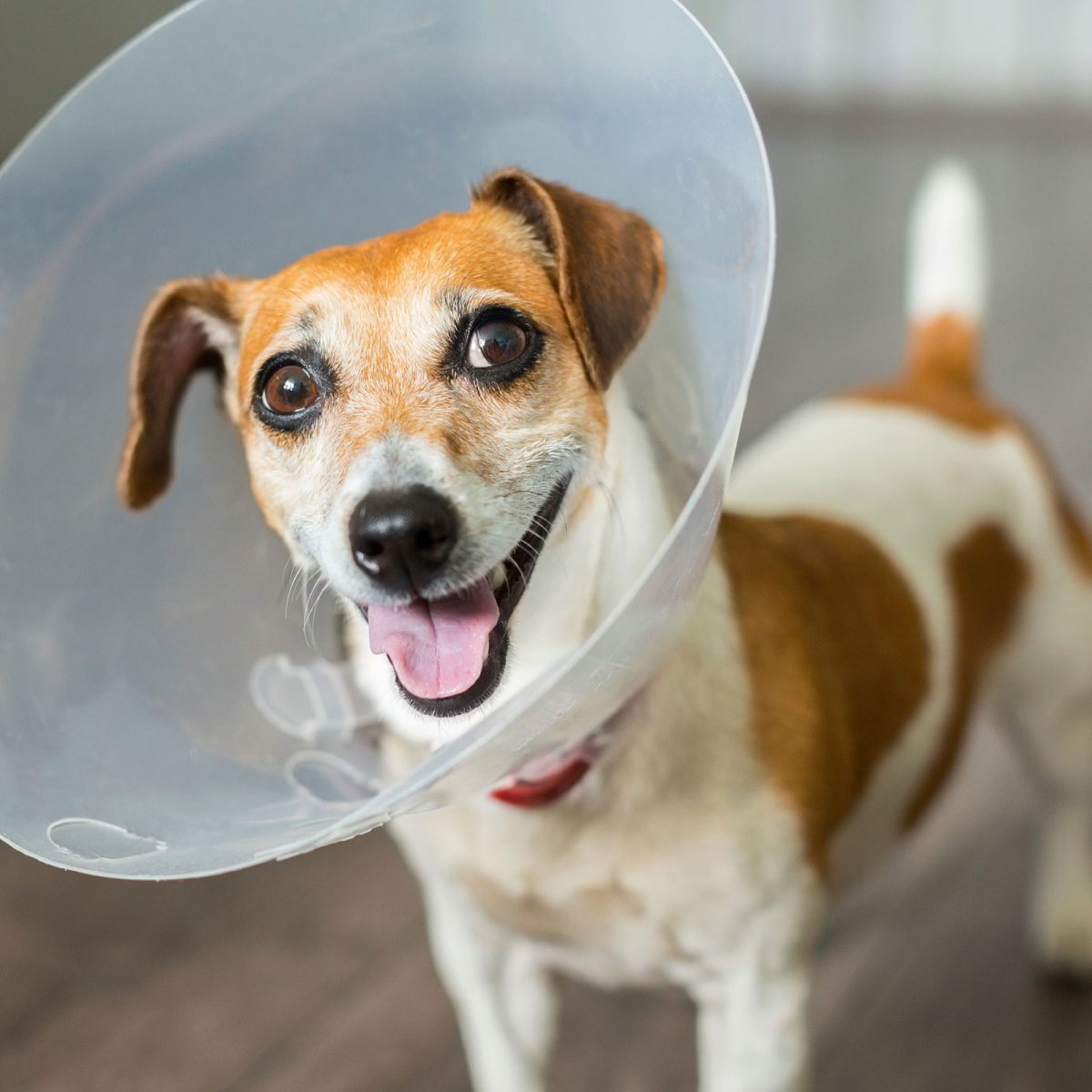 50 Things Your Veterinarian Won't Tell You | Reader's Digest