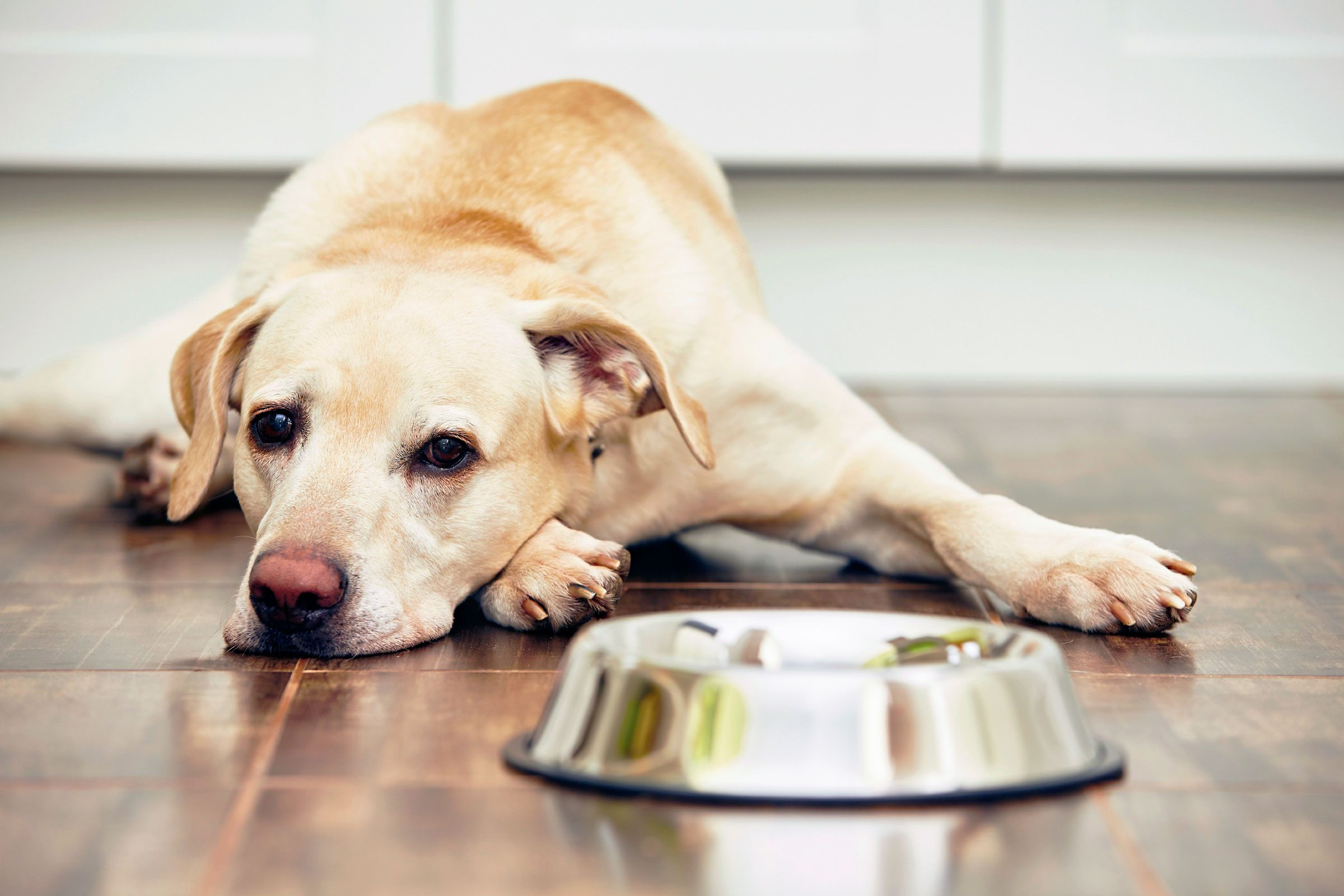 50 things your veterinarian wont tell you readers digest home cooking for your pet is harder than you think solutioingenieria Choice Image