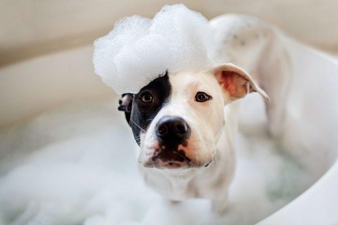 vets wont tell dog bath bubbles