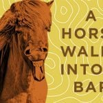 17 Horse Jokes You Can't Help but Laugh At