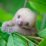 12 Adorable Sloth Pictures You Didn't Know You Needed