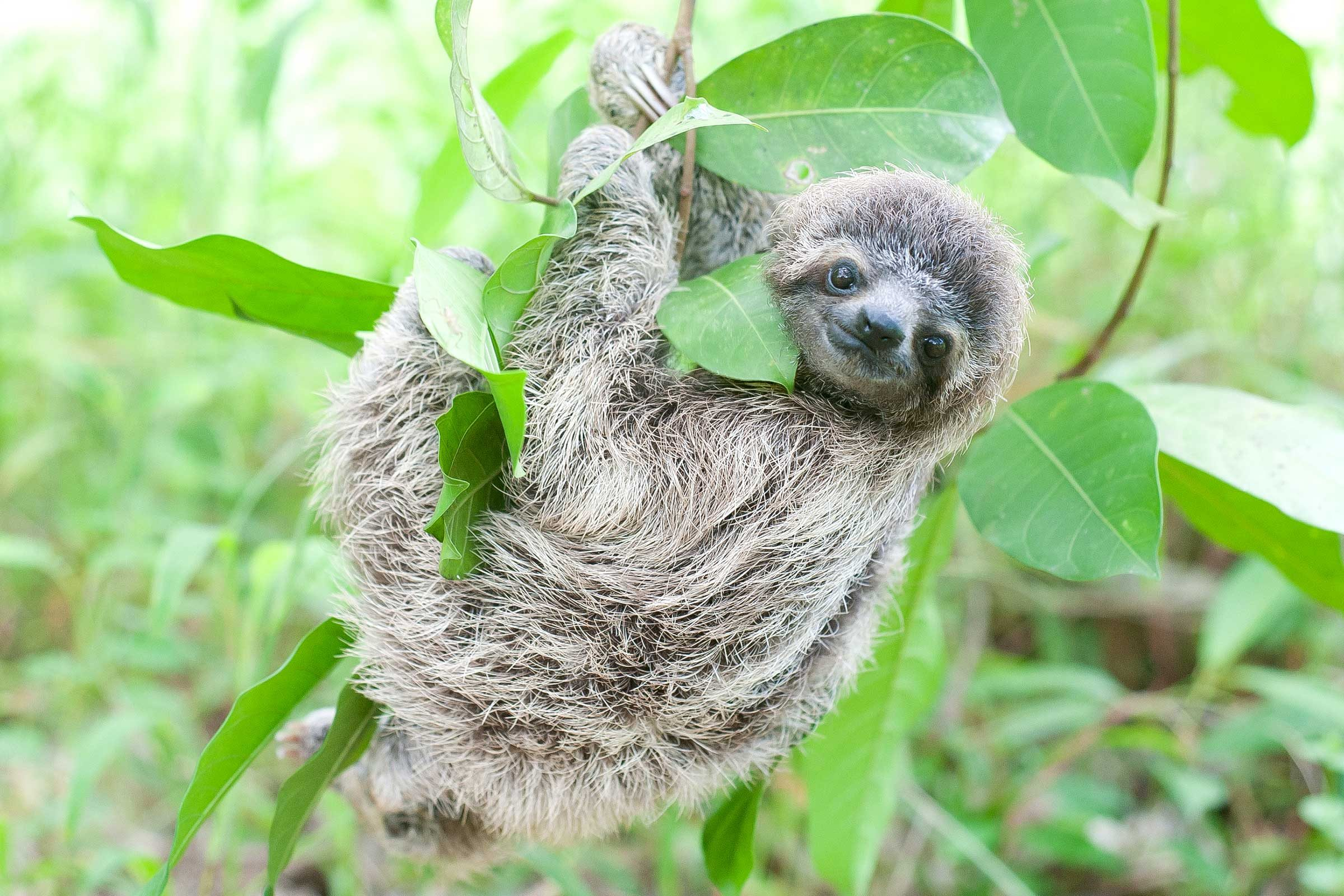 cute baby wild animals pictures