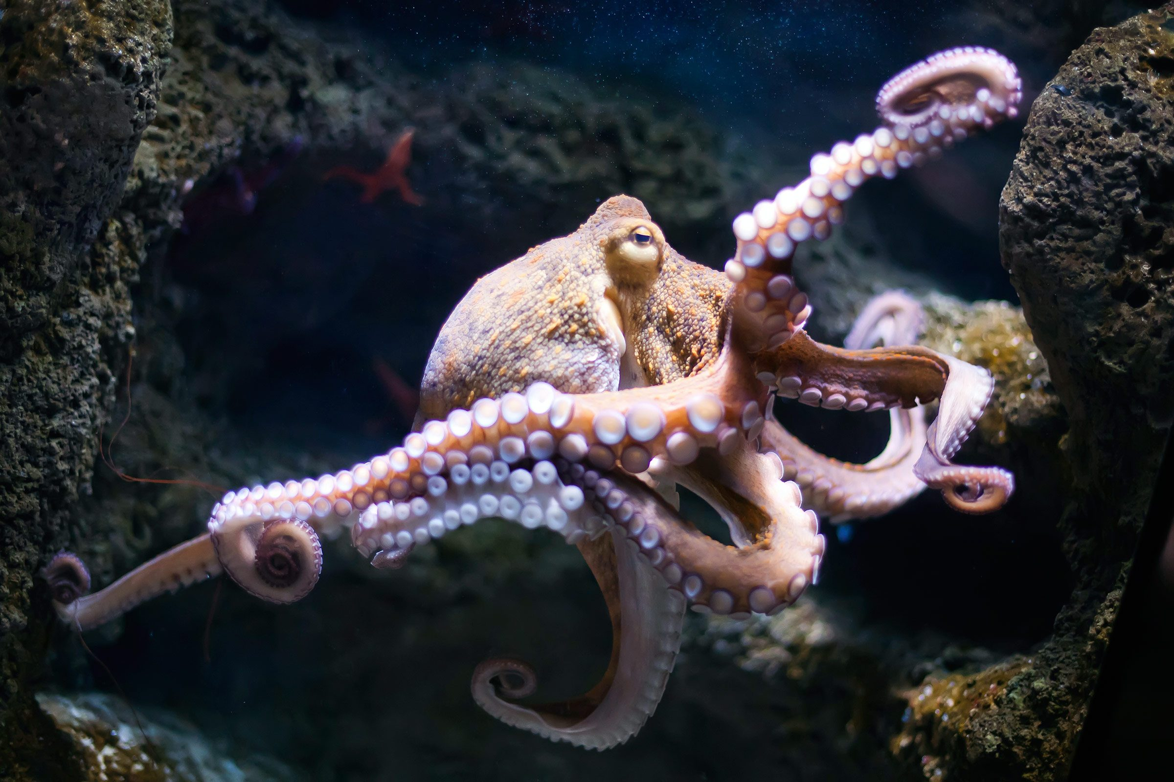 smart animals octopi