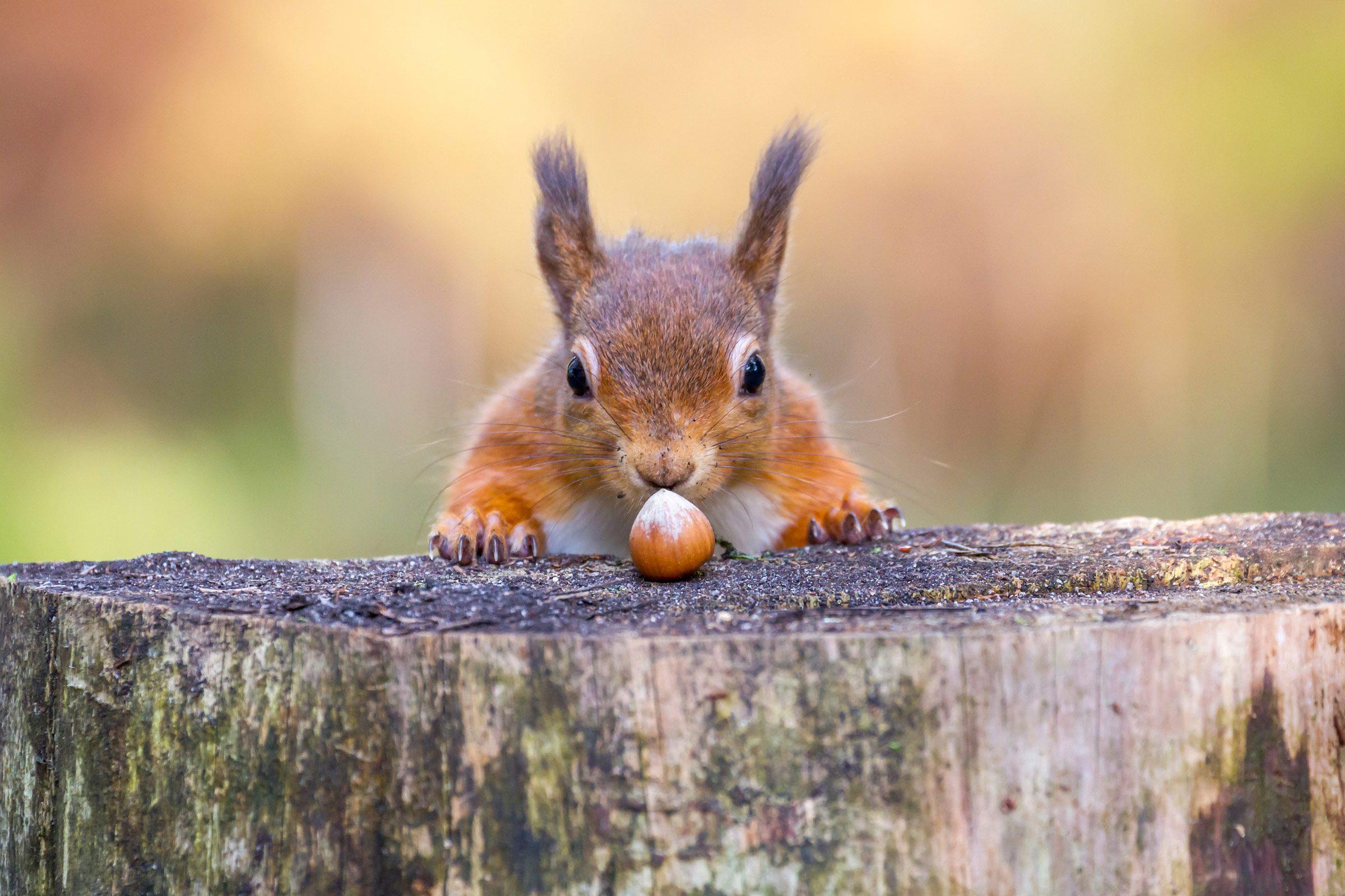 smart animals squirrel