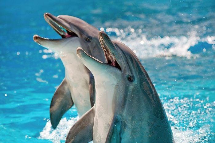 smart animals dolphins