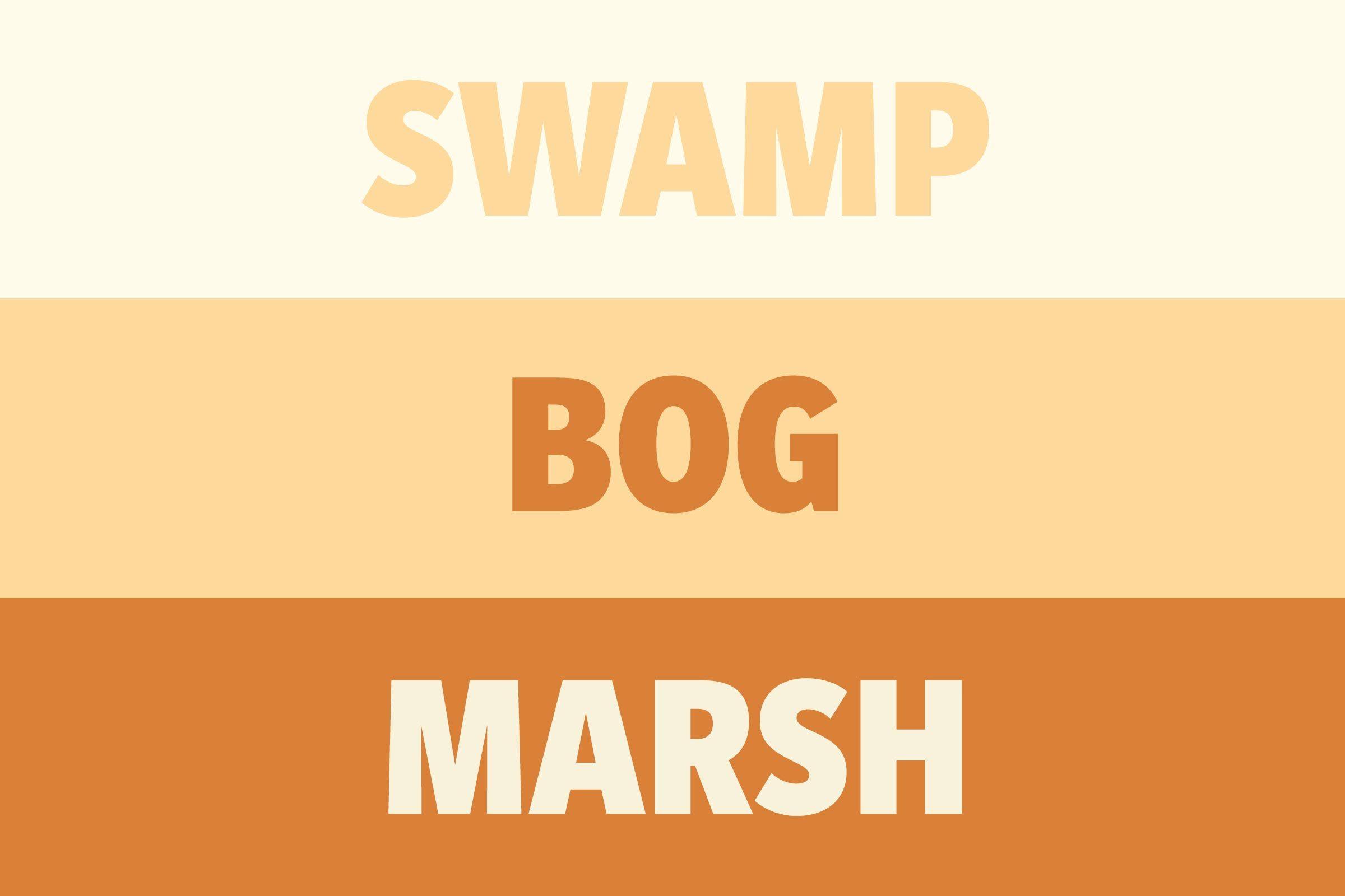 Swamp vs Bog vs Marsh