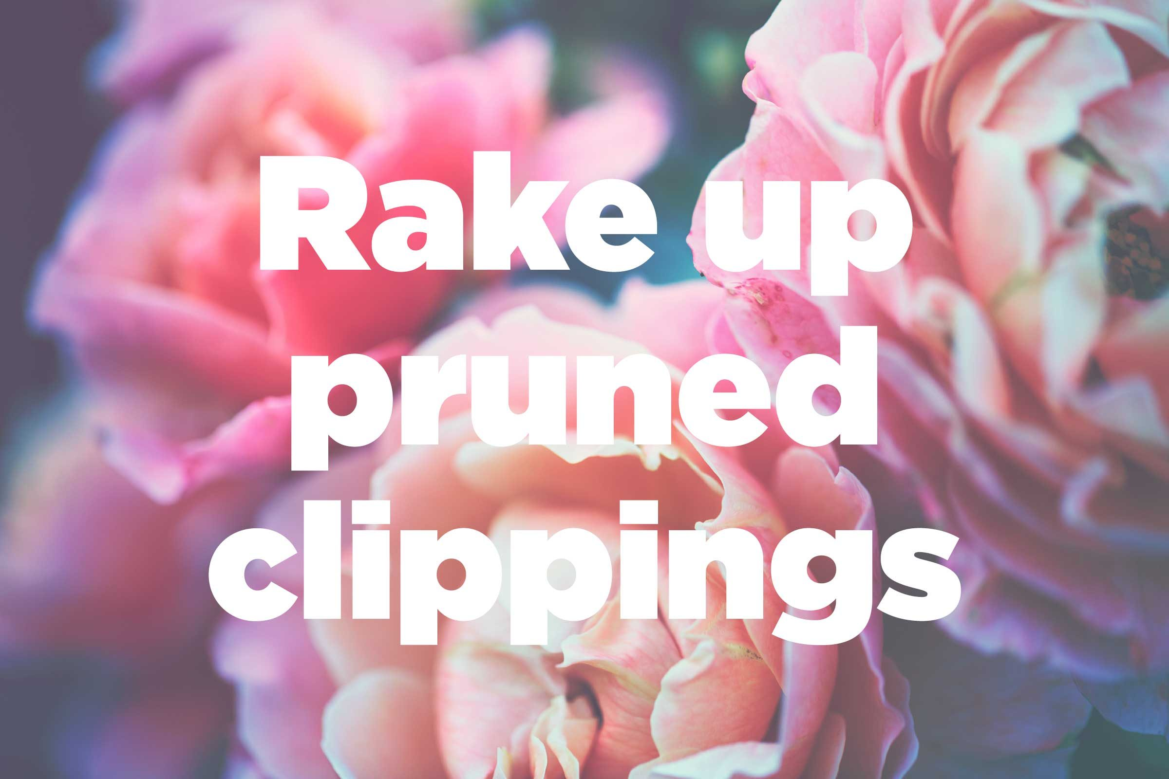 Get Rid Of Pruned Clippings